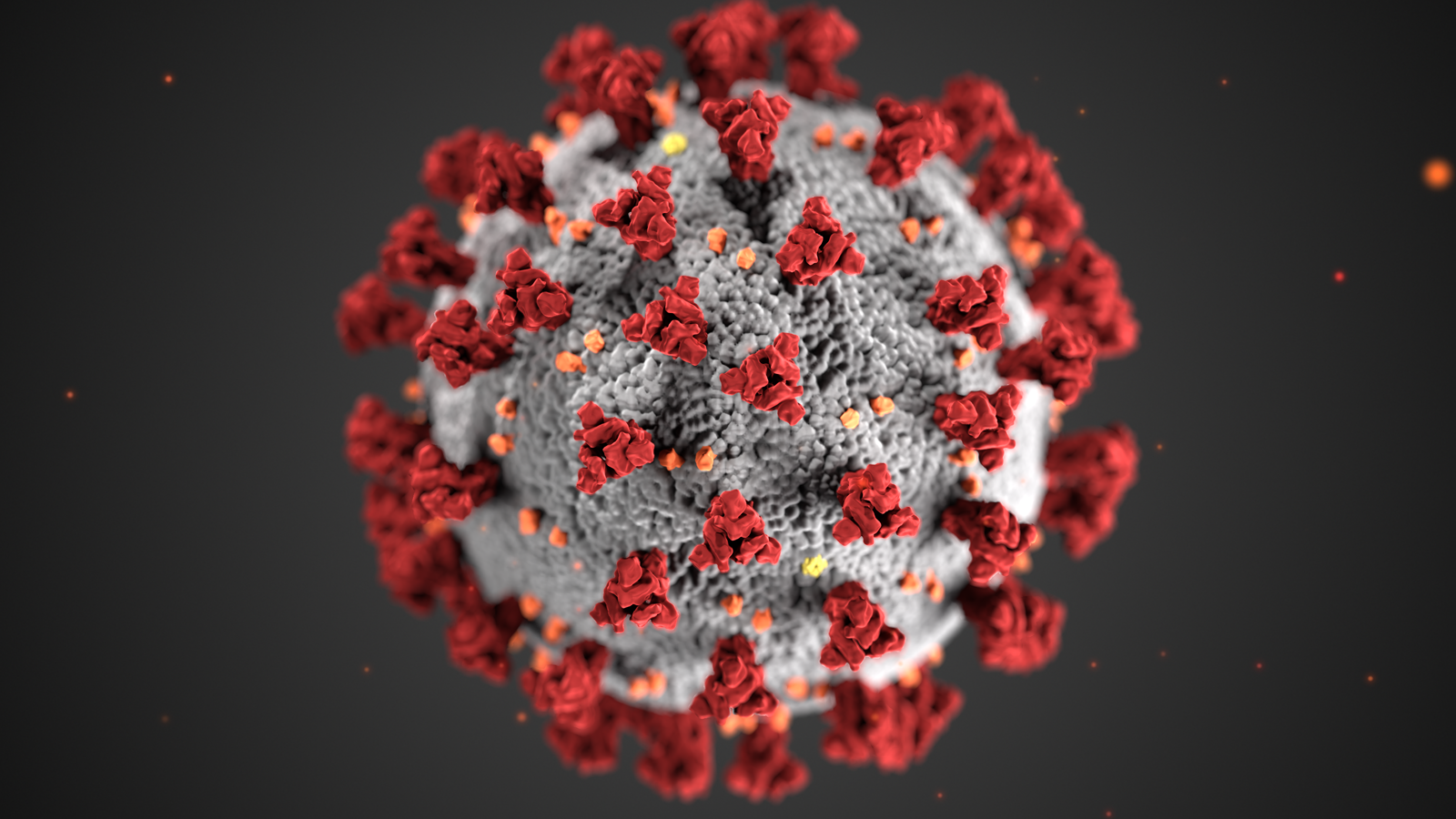 corona virus up close